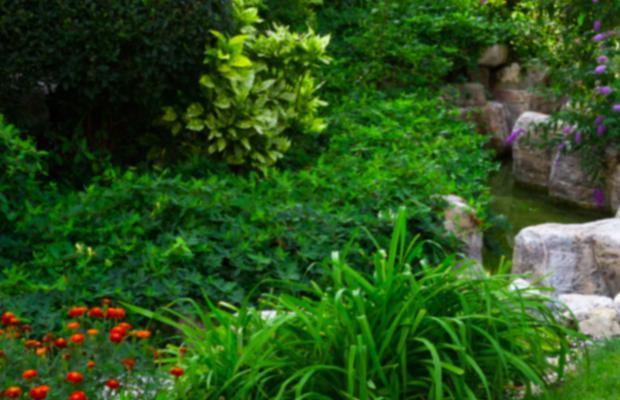 фотографии отеля Garden of Eden (Райский сад) изображение №43