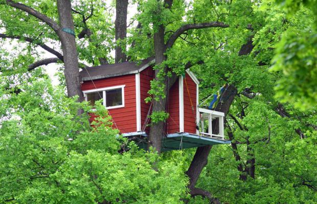фотографии Woodpecker изображение №12