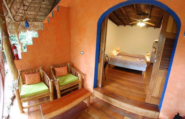 фотографии отеля Cariblue Beach and Jungle Resort изображение №51