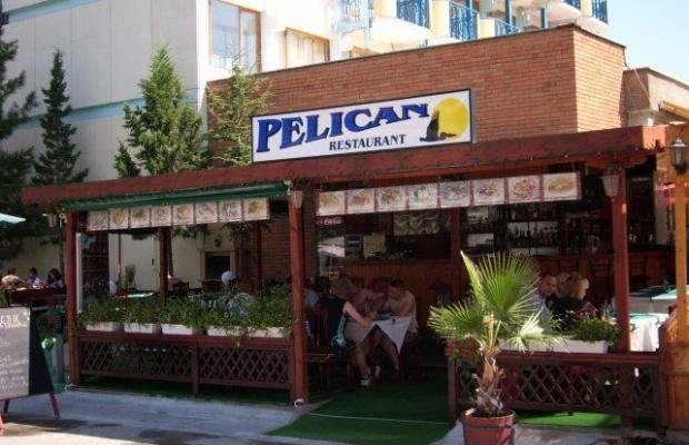 фото Пеликан изображение №18
