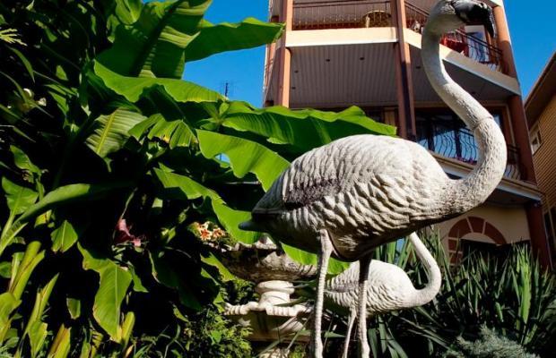 фото Фламинго (Flamingo) изображение №10