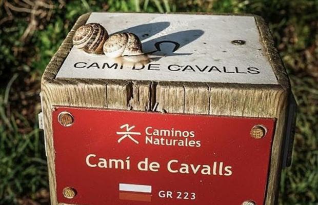 фото Carema Garden Village (ex. Carema Aldea Playa) изображение №6