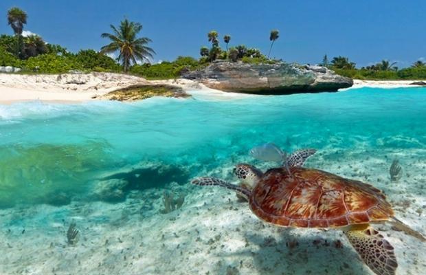 фото Zanzibar Dolphin View Paradise Resort & Spa изображение №6