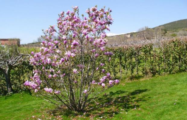 фото Casa Rural El Higueral De La Sayuela (ех. La Sayuela B&B) изображение №46