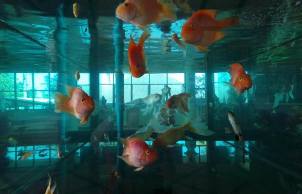 фотографии отеля Khaolak Orchid Beach Resort изображение №15