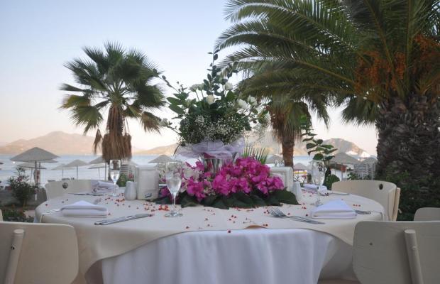 фотографии Tropikal Beach (ex. Tropical Hotel)  изображение №32