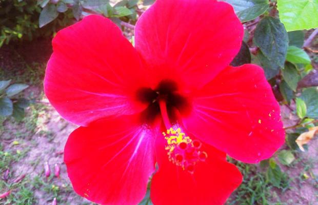 фотографии Club Gunes Garden изображение №12