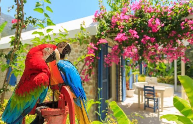 фото отеля Flamingo изображение №17