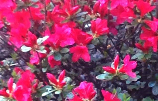 фото отеля Алая Роза (Alaya Roza) изображение №5