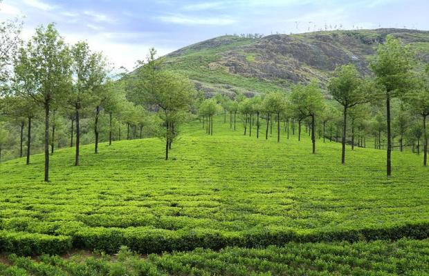 фото Elysium Garden Hill Resort изображение №10