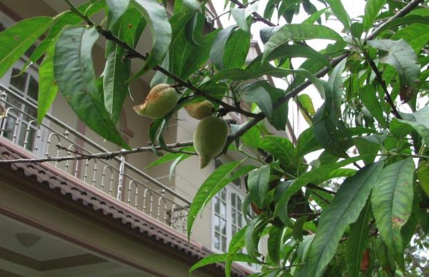 фото Garden Homestay изображение №2