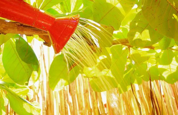 фотографии отеля Villa Flamingo изображение №7