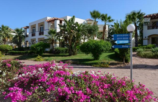 фотографии Shores Aloha Resort (Ex. Otium Hotel Aloha Sharm; Aloha Club & Resort) изображение №20