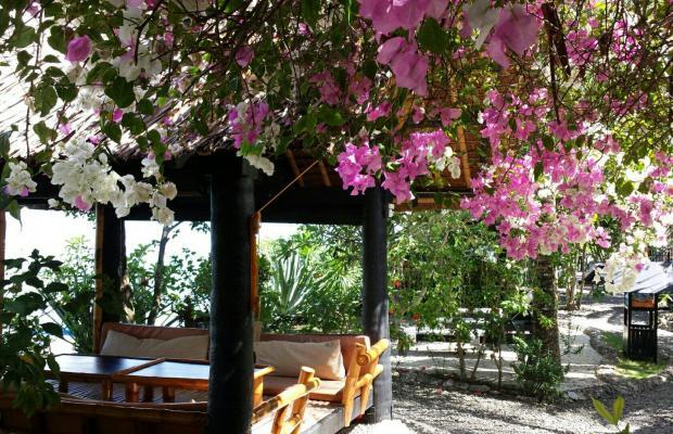 фотографии Dolphin House Resort Moalboal изображение №4