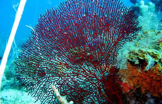 фотографии Coral Bay Beach and Dive Resort изображение №24